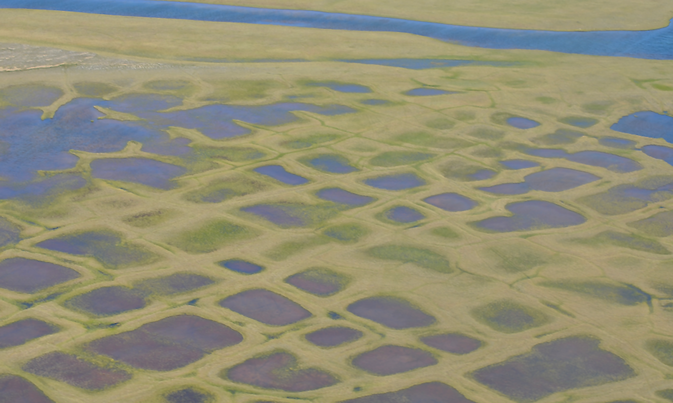 This photo taken during the CARVE experiment shows polygonal lakes created by melting permafrost on Alaska's North Slope. As the frozen soil melts, it shrinks, leaving cracks that fill with water. In winter the water-filled cracks freeze into ice wedges. Image Credit: NASA/JPL-Caltech