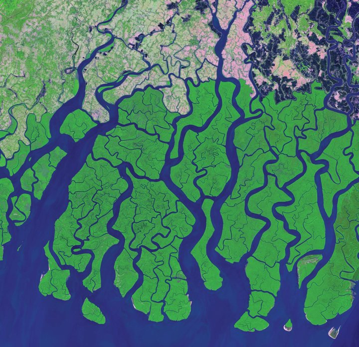 Development and agricultural clearing (pink areas) are shown encroaching the Sundarbans mangroves along the Bay of Bengal in this Landsat 8 image taken in March 2014. Image Credit: NASA/USGS