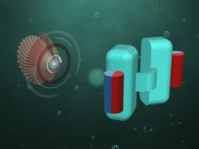 Planck researchers in Stuttgart has built a tiny submarine, shown in the drawing on the right. Small magnets, shown here as red and blue cylinders, open and close the two halves (shells) of the device. © Photo: Alejandro Posada / MPI for Intelligent Systems