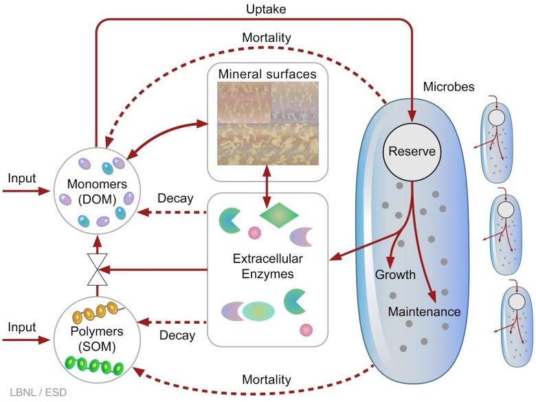 The complex and dynamic livelihood of soil microbes is captured in this schematic. For the first time, these processes are represented in a computer model that predicts the fate of soil carbon as temperatures rise. (Credit: Berkeley Lab)