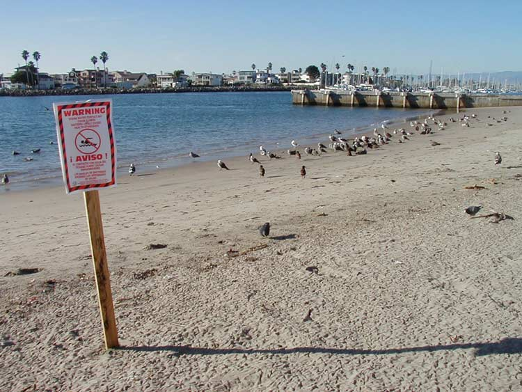 Sign warning of contamination at Channel Islands Harbor, Ventura, Calif. New models could help public health officials better predict when water contaminants will harm beach goers. Image credit: Cara Smith / Heal the Bay