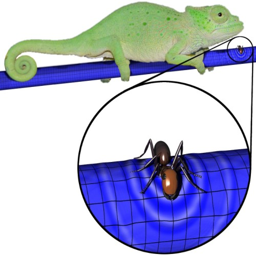A branch that is one-dimensional to a chameleon is two-dimensional to an ant, and particles or waves that travel along the short dimension can loop around and even resonate.