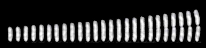 A time series of a single E. coli cell from birth to division.