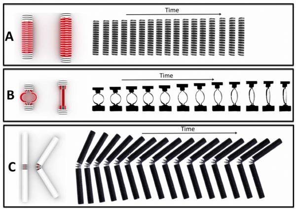 """Time-lapse photos of three basic components of self-assembling materials, changing shape after being immersed in water. The top two are expanding """"linear actuators,"""" the bottom one a self-folding hinge. Image courtesy of the researchers"""