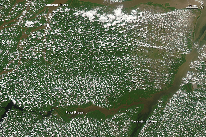 Popcorn clouds above the Amazon rainforest, August 19, 2009. This type of cloud forms during the dry season, likely from water vapor released by plants during transpiration. Image Credit: NASA's Earth Observatory