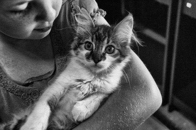 Picture: A girl with a cat. Children with autism have stronger social skills when they live with a pet, an MU researcher found.