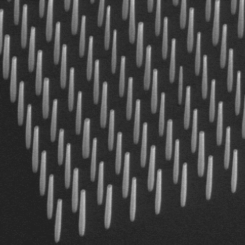 Scanning electron microscope image of an array of GaN nanowires with a spacing of 800 nm.