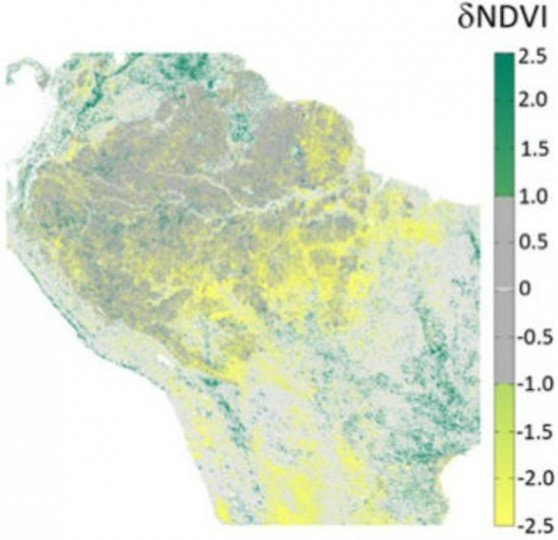 Change in Amazon greenness from 2000 to 2012, measured as Normalized Difference Vegetation Index (NDVI). Greener colors represent increased greenness, gray is no change, and yellow represents decreased greenness over the 13-year record. Image Credit: Hilker et al.