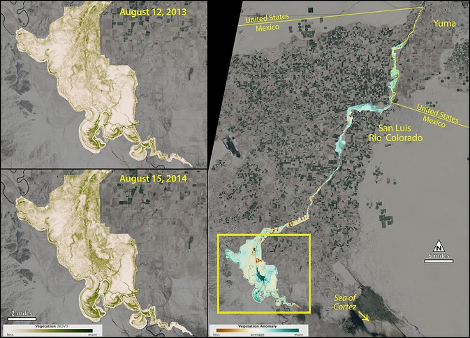 After the pulse flow, the lower Colorado River saw an increase in vegetation, as measured by the Normalized Difference Vegetation Index (NDVI) using Landsat 8 data. The left panel shows the NDVI before and after the pulse; the right panel shows the difference between the two measurements. Image Credit: NASA's Earth Observatory/J. Allen; NASA Goddard/M. Radcliff