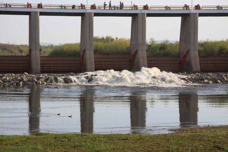 """On March 23, 2014, water was released from the Morelos Dam on the U.S.-Mexico border, as part of the """"Minute 319"""" agreement. Researchers studying the effects of the 105,000-acre-foot flow, using Landsat 8 and other tools, saw a resulting 'green-up' of the lower Colorado River Delta. Image Credit: Karl Flessa, University of Arizona"""
