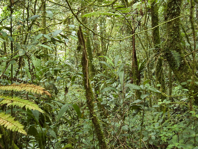 A new NASA study suggests that tropical forests, like this one in Malaysia, absorb more atmospheric carbon dioxide than is absorbed by forests in Alaska, Canada and Siberia. Image Credit: Wikimedia Commons