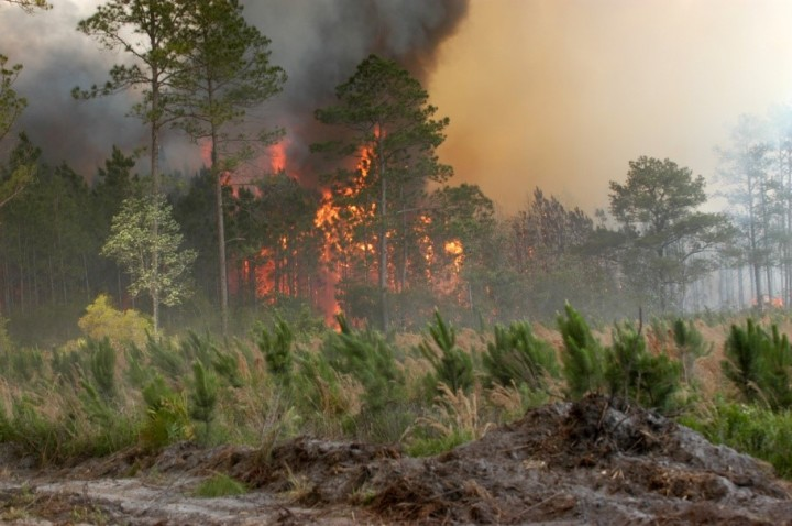 """Extremely hot weather causes forest fires, lower yields and increased death toll, and may become """"normal"""" by 2040. Image source: Wikipedia, License: Public Domain."""