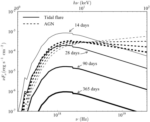 Comparing spectral irradiances from a tidal flare and an AGN. The four solid lines with increasing thickness depict the irradiances of the tidal flare (14; 28; 90; 365) days after the initial outburst. The four dashed curves are for the AGN, adopted from the figure above. Image courtesy of the researchers.