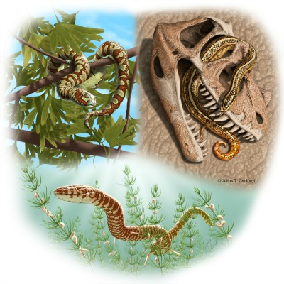 Artist's conception of three of the four newly identified ancient snakes: (top left) Portugalophis lignites (Upper Jurassic) in a gingko tree, from coal swamp deposits at Guimarota, Portugal; (top right) Diablophis gilmorei (Upper Jurassic), hiding in a ceratosaur skull, from the Morrison Formation in Fruita, Colorado; (bottom) Parviraptor estesi (Upper Jurassic/Lower Cretaceous) swimming in freshwater lake with snails and algae, from the Purbeck Limestone in Swanage, England (Image: Julius Csotonyi)