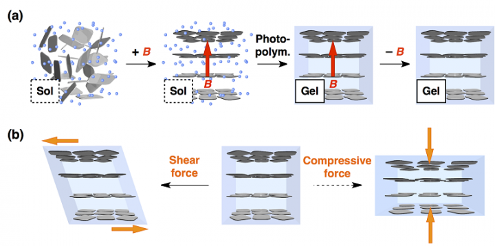 (a) By in-situ gelating an aqueous dispersion of the nanosheets in a magnetic flux, cofacial ordering of the nanosheets can be fixed. (b) The resultant hydrogel easy deforms along a shear force applied parallel to the nanosheet plane but is highly resistive against a compressive force applied orthogonally. © 2015 Takuzo Aida.