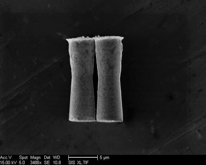 This is a scanning electron microscopy image of the micromotors. Image credit: Jacobs School of Engineering/UC San Diego