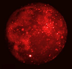 Mid-infrared Moon