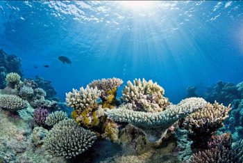 The coverage of living corals on Australia's Great Barrier Reef could decline to less than 10 percent if ocean warming continues, according to a new study. Image credit: Catlin Seaview Survey/Underwater Earth