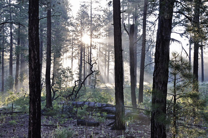 Water evaporating from forest soil in the morning sun. Soil moisture links together the cycles of water, solar energy, and carbon in plants. Image Credit: USDA