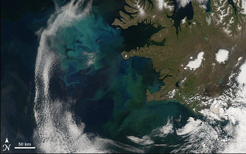 The bright blue and green colors in this satellite image show the North Atlantic Bloom. Image credit: NASA