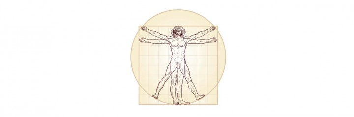 A detailed drawing based on The Vitruvian Man by Leonardo da Vinci following the ideal proportions of the body described by the ancient Roman architect Vitruvius. Image credit: Odyssei Dreamstime.com