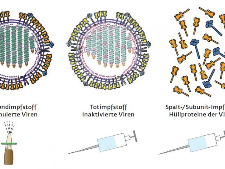 Preparation for an emergency: Three vaccination methods have become established for priming the immune system to defend the body against viral infection. In the first method, live but attenuated viruses are administered, for example in the form of a nasal spray (left). For this purpose, the viruses are grown so that they can still reproduce but are no longer able to cause infection. In the second method, killed viruses are administered by injection. In the third method, only fragments of the viral shell or proteins are injected. © Chiuz / Chem. Unserer Zeit, 2013, 47, 12 – 22