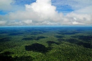 Aerial view of the Amazon Rainforest, near Manaus. Image credit: Neil Palmer/CIAT via Wikimedia Commons
