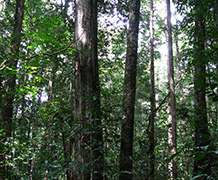 Using a vast dataset of over 500 forest plots and 200,000 trees made up of 3,600 named species, the researchers were able to compare the abundance, biomass stock and woody growth of each species.