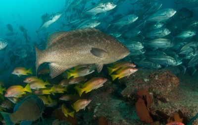 Environmental health Some of Baja's fishing communities target more than 90 marine species in a given year, many of them associated with rocky reef ecosystems. Image: Octavio Aburto-Oropeza/UC-San Diego