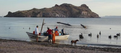 Dawn at Agua Verde: Unloading the catch Sustainability is not just a matter of environmental preservation. More than 9,000 small-scale fishers make their living on the waters off Baja California Sur. The best approach to policymaking considers many interests. Image: Heather Leslie/Brown University