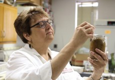 Elizabeth Andress measures the headspace on a jar of relish that she is canning in her lab on the University of Georgia campus. Image credit: Cal Powell/UGA