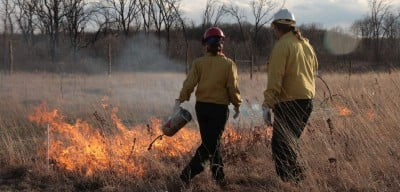 Controlled burns were used to simulate the impact of more frequent fires Photo: Peter Wragg