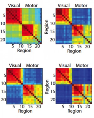 The brain regions that control fingers movements and those that processes visual stimulus became increasingly autonomous.