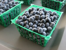 Freshly picked blueberries sit in baskets at the University of Georgia horticulture farm in Athens, Ga. Image credit: Stephanie Schupska/UGA
