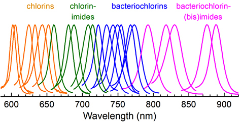Using their new-found knowledge of the link between structure and absorption, the chemists were able to synthesize molecules that filled a hole in the absorption spectrum of native pigments (the chlorin-imides) and extended absorption deeper into the infrared (the bacteriochlorin-(bis)imides). Image credit: Holten et al.
