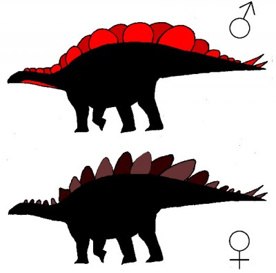 """Of the two plate varieties — short and wide, and tall and narrow — females had one type of plate and males donned the other. Lacking fossil evidence of which sex had which plate type, Saitta supposed that males (top) had the wide plates, which likely served as """"billboard"""" displays males used to attract females. Females (bottom) may have had the tall, narrow plates to defend themselves against predators. Image credit: Evan Saitta, University of Bristol"""