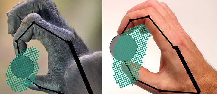 This figure shows samples of the ability of a gorilla and a human to grip and move an object. The kinetic model estimates the ability to grip and manipulate a circular object. The dots indicate positions in which the object can be gripped.