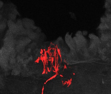 A sensory neuron (red) in lung tissue (gray) is one of two types of neurons in the mouse vagus nerve that control breathing. Image credit: Liberles lab