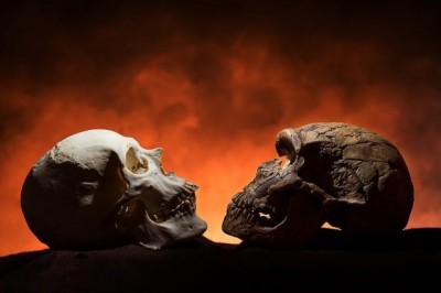 Notice how the modern skull, on the left, has a point at the bottom of the face compared to the Neandethal-era skull on the right. The reason: Only modern humans have chins. Image credit: Tim Schoon
