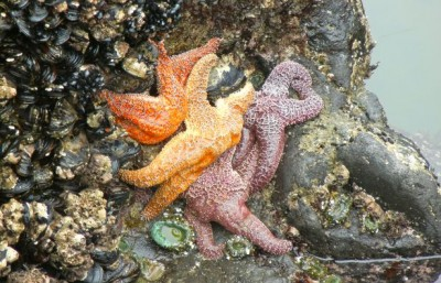 The rocky intertidal, shown here, is one of the ecosystems that ecologists have been studying for decades to learn about how different species interact. Image credit: Judith Bronstein