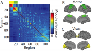 """The researchers looked at the degree to which brain regions """"talked"""" to each other during a six-week learning process."""