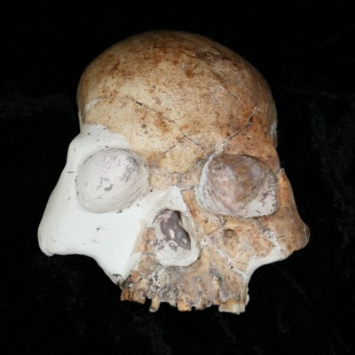 The 11,000 year old skull from Longlin Cave in Southwest China might be the youngest example of a hybrid between modern and archaic humans. Darren Curnoe