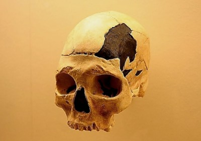 The ~35,000 year old Pestera cu Oase cranium is probably a hybrid between modern humans and Neanderthals. Wikimedia Commons, CC BY-SA