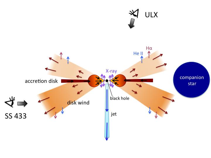 This is a schematic view of ULXs (looking from upper side) and SS 433 (looking from left side). Strong X-rays are emitted from the inner region of the supercritical accretion disk. Powerful winds are launched from the disk, which eventually emit spectral lines of helium ions and hydrogen atoms. Image credit: Kyoto University
