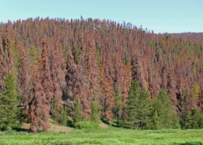 The western U.S. has been a hotspot for forest die-offs such as this one in Colorado. Image credit: William M. Ciesla, Forest Health Management