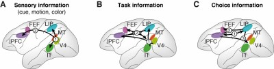 This image shows the results for the dynamic interplay of the sensory, task, and cue information in the brain's cortex: sensory information (left) flowed from the V4 and MT to several other cortical regions; task information (center) starts in the V4 and IT, before flowing forward and backward; choice signals (right) built up in PFC and LIP, before traveling to cortical regions in the front and back of the brain. Courtesy of the researchers