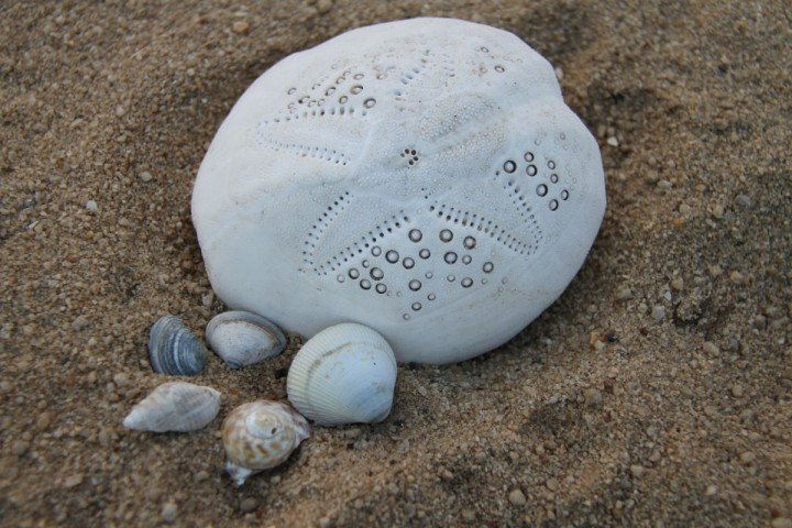 Seashells provide protection to fragile creatures in a process called biomineralisation.