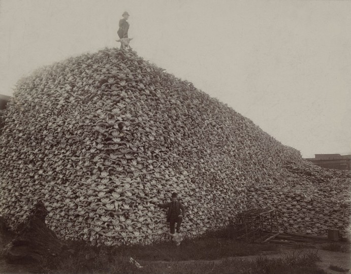 Bison hunters posing in front of a pile of skulls waiting to be ground for fertilizer. Is this the figurative future of our planet's fauna? A new study, published in the journal Science Advances, claims that even with extremely conservative estimates, we are entering the sixth great extinction as we speak. Image credit: author unknown via Wikipedia.org, CC0 Public Domain.