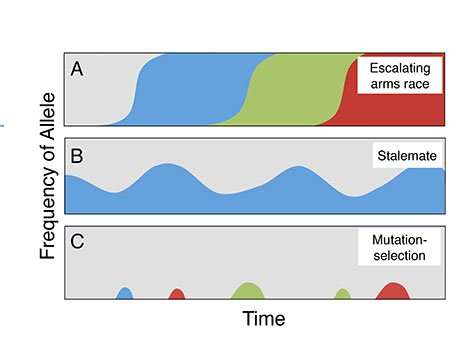 Scenarios for the evolutionary dynamics of cheating behaviors. In the arms race (top), epidemics of cheating and resistance successively sweep through populations. In the stalemate (middle), cheating becomes endemic but does not take over the population. In the mutation and selection scenario (bottom), cheating mutations keep popping up but are quickly removed by selection. Different colors represent different alleles, or variants, of the social genes. Image credit: Ostrowski et al.