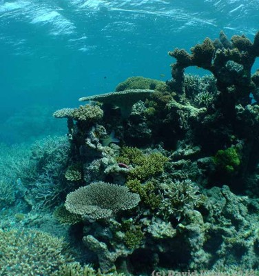 Heron Reef flat, a coral reef located in the southern part of Australia's Great Barrier Reef. Credit: David I. Kline